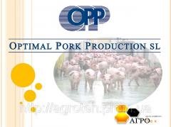 Consulting support of pig farms