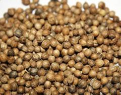 Processing of coriander