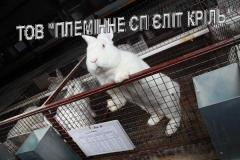 The equipment cellular for rabbit breeding,