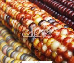 Проверка на наличие ГМО в пищевой продукции