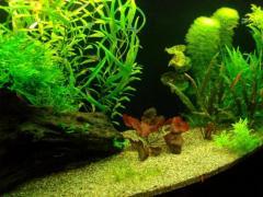 Услуга по аквадизайну пресноводного аквариума
