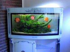 Услуга по обслуживанию пресноводных аквариумов
