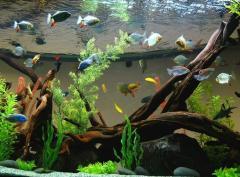 Оформление морских аквариумов