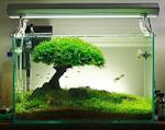 Оформления пресноводных аквариумов