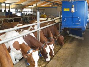 Экспертиза и консультации в животноводстве