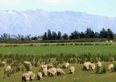 животноводство,растеневодство,производство