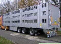 Huisdieren vervoer