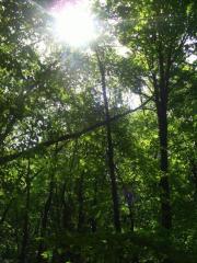 Зеленый туризм в Крыму, цена, фото