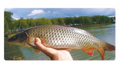 Fishery in the rivers, lakes, water reservoirs,