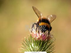 Отдых на пчелиных ульях Украина Каменец-Подольский, сон на улье Украина, отдых на пчелиных ульях скидка 50%, отдых на ульях