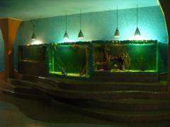 Аквадизайн и обслуживание  аквариума