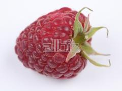 Cultivation of raspberry