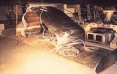 Комплект успокоителей качки - специальные крылья из титанового сплава