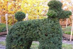 Фигурная стрижка деревьев, топиар