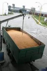 Transportation of grain crops