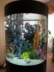 Дизайн и обслуживание аквариумов.