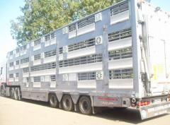 Transportations of cattle across Ukraine and