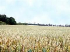 Выращивание культур в сочетании с животноводством (смешанное сельское хозяйство)