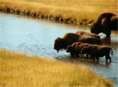 Туры по дикой природе