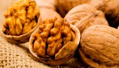 Переработка и реализация орехов, опт