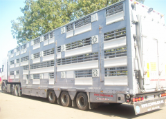 Transportation of animals by the cattle trucks