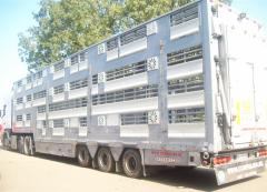 Tierbeförderung