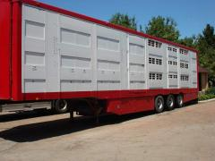 Transportation of cattle by the cattle truck