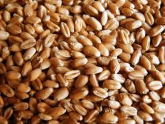 Фумигация зерновых продуктов в складах