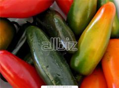 Хранение овощей и фруктов Украина, цена, фото