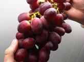 Импорт фруктов,  Импорт продуктов питания