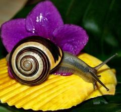 Litkoterapiya, snail