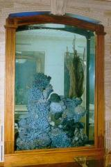 Консультации по запуску аквариума
