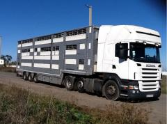 Международные перевозки авиа, скотовозом  в