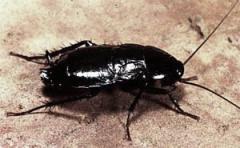 Extermination of cockroaches, flies. Nikolaev.