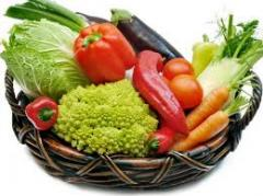 Cultivation of vegetable cultures for export