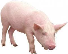 Ветеринарное обслуживание животноводческих