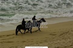 Прогулки на лошадях, прокат лошадей, тренировки конкурного направления