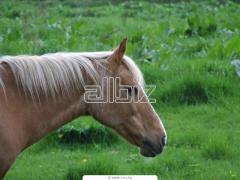 Катание на лошадях, прокат лошадей, тренировки конкурного направления