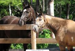 Прокат лошадей, тренировки конкурного направления, конный клуб