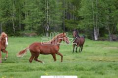 Услуги конно-спортивные, прокат лошадей, тренировки конкурного направления, конный клуб