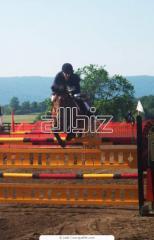 Тренировки конкурного направления, уроки верховой езды, катание на лошадях