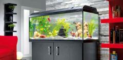 Чистка и обслуживание аквариумов и террариумо