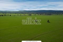 Услуги по купле-продаже земельных участков
