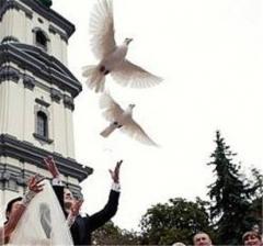 Запуск голубей