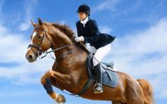 Услуги конно-спортивные
