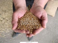 Переработка зерновых на крупы