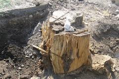 Выкорчевывание деревьев Донецк область