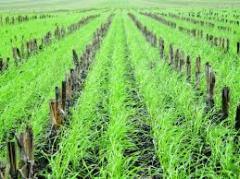 Предоставление услуг в растениеводстве