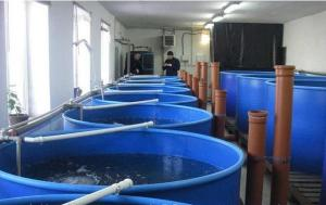 Cultivation of fresh-water fish, fish stock, we