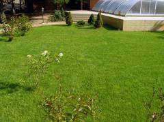 Устройство газонов, цветников и альпинариев